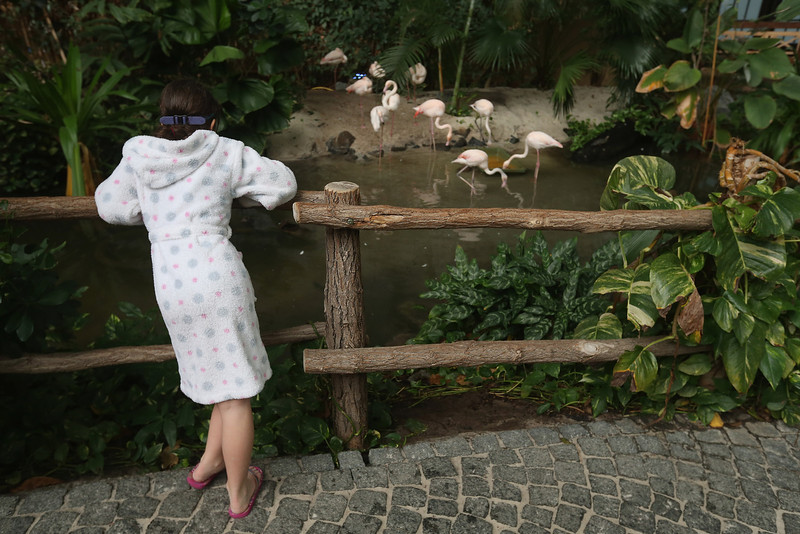 . A young visitor looks at live flamingos standing in an enclosure at the Tropical Islands indoor resort on February 15, 2013 in Krausnick, Germany. Located on the site of a former Soviet military air base, the resort occupies a hangar built originally to house airships designed to haul long-distance cargo. Tropical Islands opened to the public in 2004 and offers visitors a tropical getaway complete with exotic flora and fauna, a beach, lagoon, restaurants, water slide, evening shows, sauna, adventure park and overnights stays ranging from rudimentary to luxury. The hangar, which is 360 metres long, 210 metres wide and 107 metres high, is tall enough to enclose the Statue of Liberty.  (Photo by Sean Gallup/Getty Images)