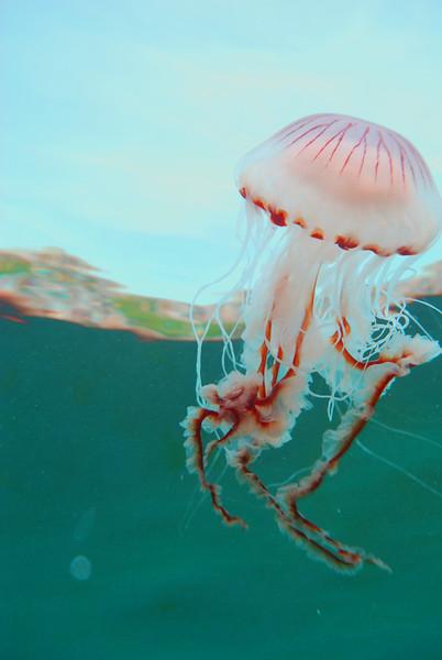 jelly 15.jpg
