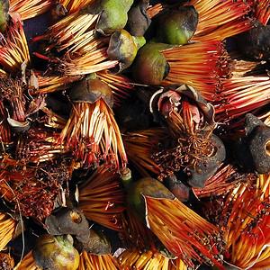 Sittway, Burma - Street and Fish Market 2010