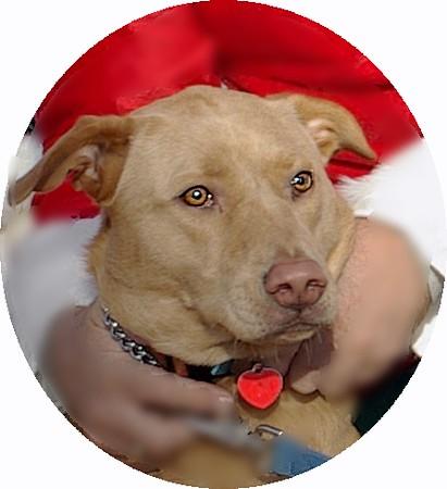 CHARLIE (dingo boy)