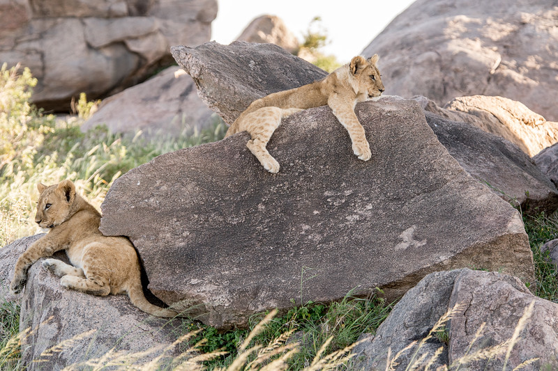 Tanzania_Feb_2018-611-2.jpg