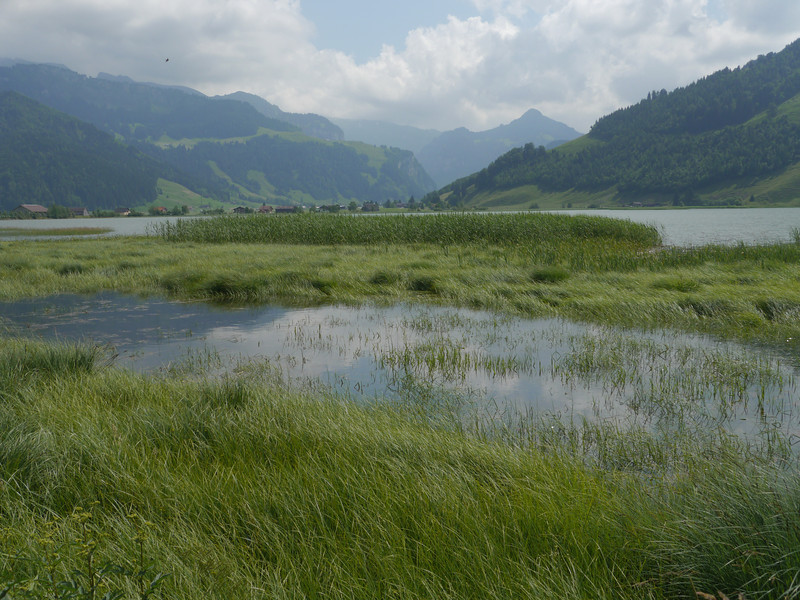 @RobAng 2013 / Velokurztour um den Sihlsee / Euthal, Euthal, Kanton Schwyz, CHE, Schweiz, 889 m ü/M, 2013/07/06 15:35:24