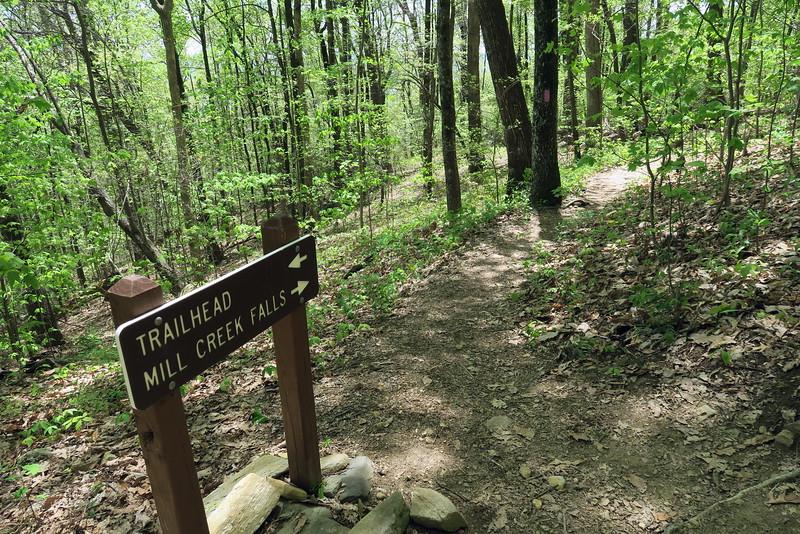 Pinnacle Mountain-Mill Creek Falls Trail Junction - 2,200'
