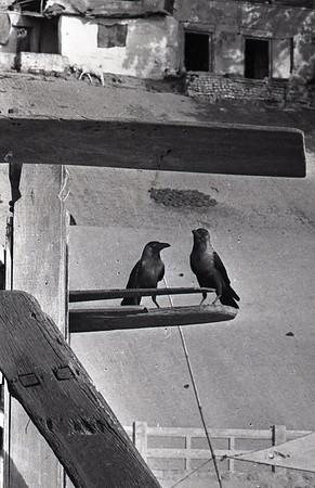 On the river - Banaras April 1968