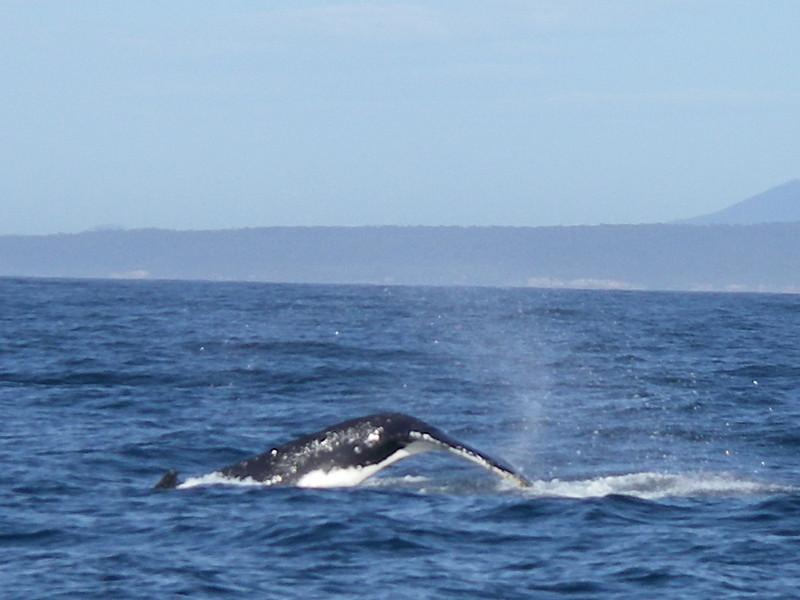 Sydney trip and Mirimbula 084.JPG