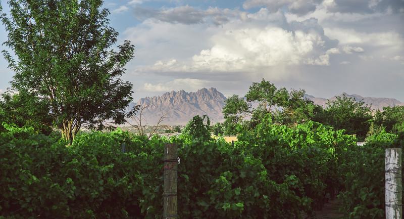 St. Clair Winery Vineyard + Organ Mountains