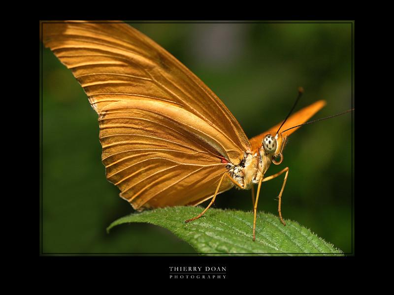 my butterfly.jpg