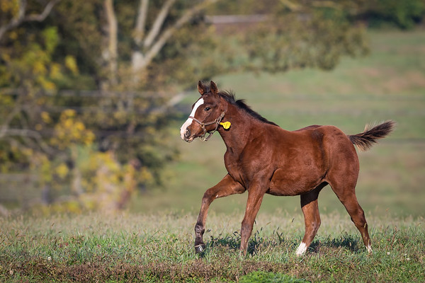 Darley… Foals '13