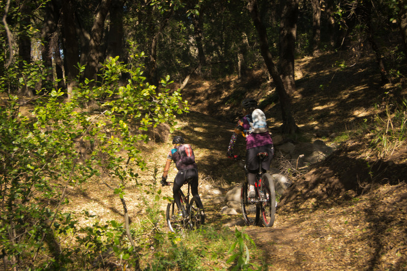 Oak Springs Trail 14W10,