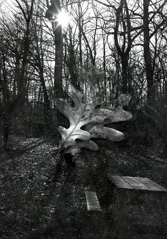 double exp oaks.jpg