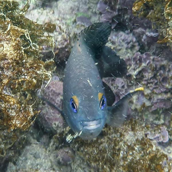GalapagosP1020199.jpg