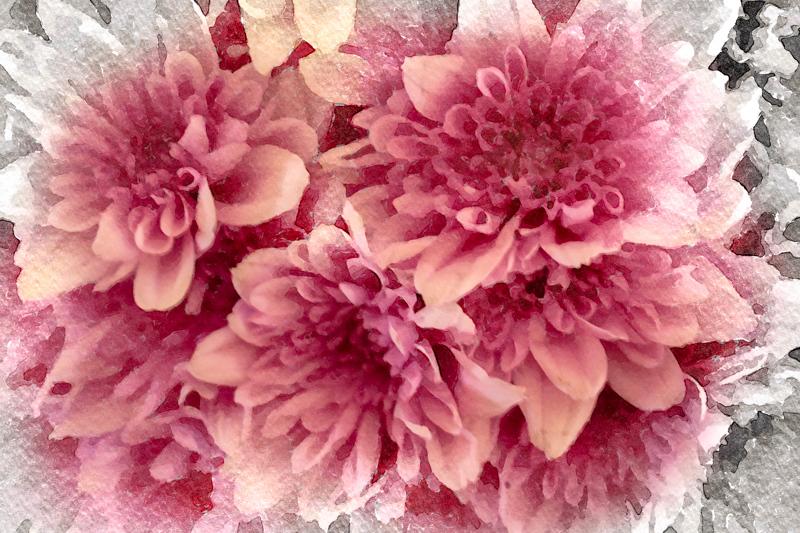 February 17 - Bouquet of carnations.jpg