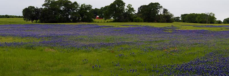 BlueBonnet Field Pano 2.jpg