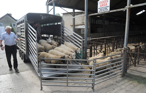 OTLEY AUCTION MART 23/6/2014