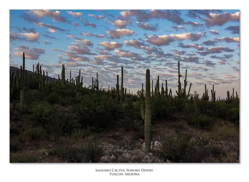 Arizona_050617_0370.jpg