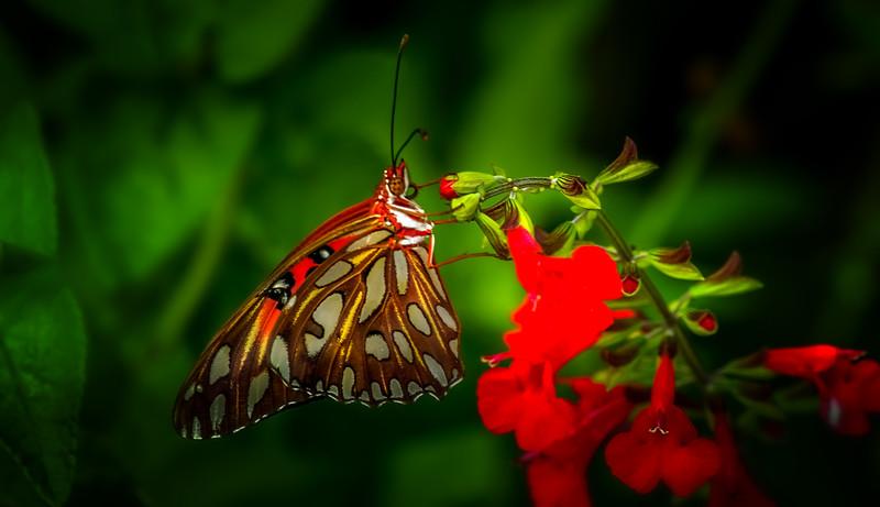 Butterflies-009.jpg