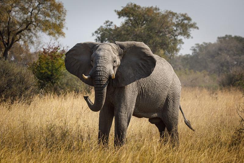 Botswana_0818_PSokol-1400.jpg
