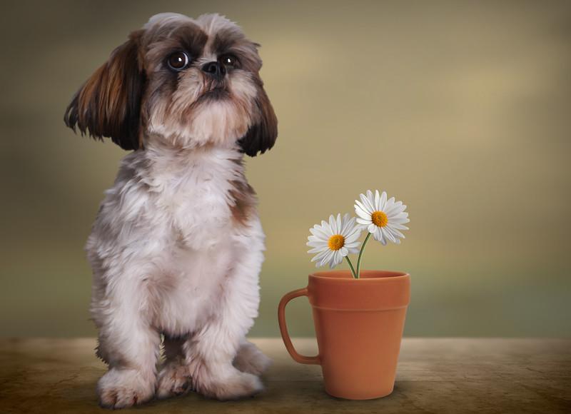 nice-puppy01.jpg