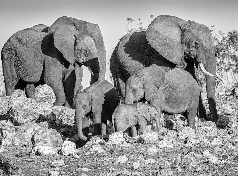 Elephants Botswana-8.jpg