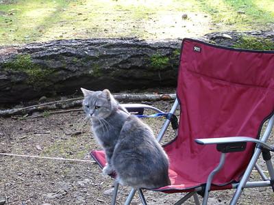 Teardrop Camping
