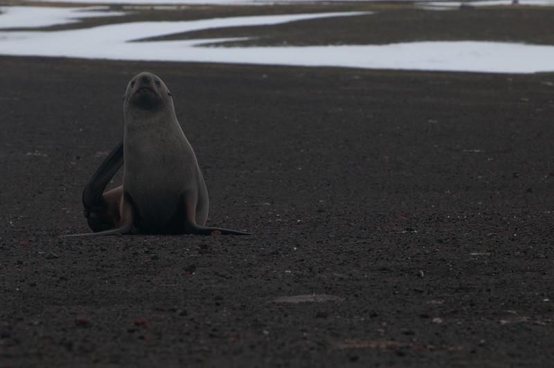 Antarctica 2015 (81 of 99).jpg