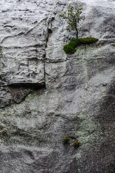 20101110 Yosemite 019.jpg