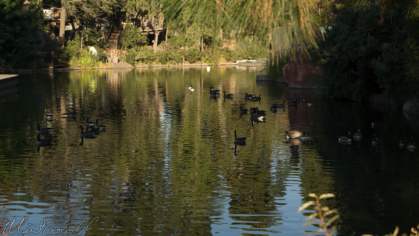Disneyland Resort, Disneyland, Frontierland, Tom Sawyer Island, Tom, Sawyer, Island, Duck