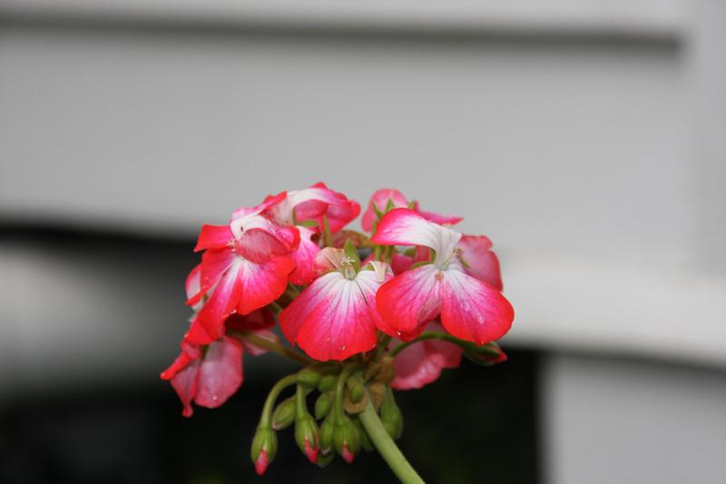 garden (31).jpg