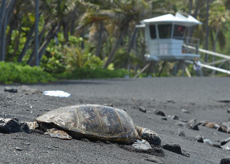 Big Island - Hawaii - May 2013 - 19.jpg