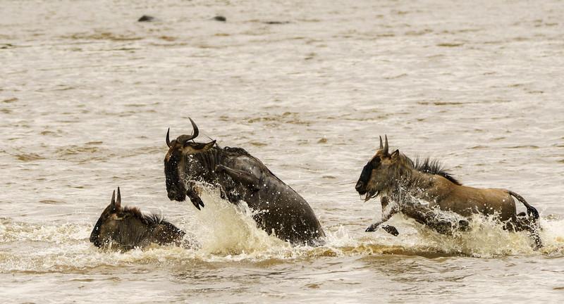 Kenya 2015-05646.jpg