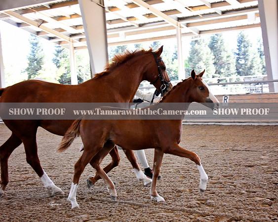 2019 ISR/OldNA Inspection @ Starr Vaughn Equestrian 9.10.19