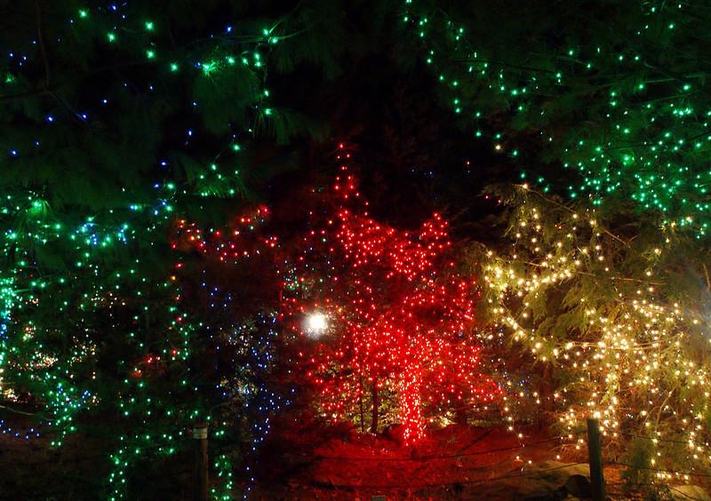 Stone Zoo lights