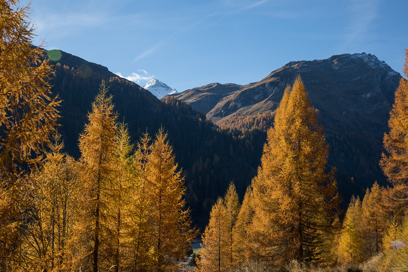 Herbst-im-Rheinwald--20.jpg
