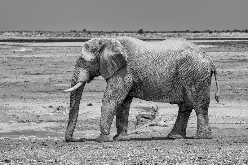 Namibia 69A8378b.jpg