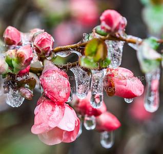 Winter Garden Scenes