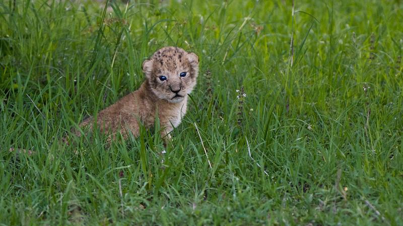 Lions-0113.jpg