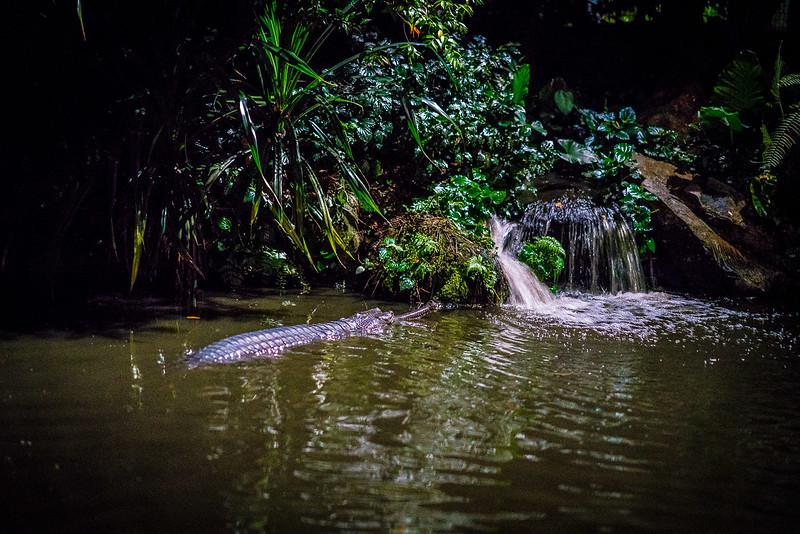 Night-Safari-9768.jpg