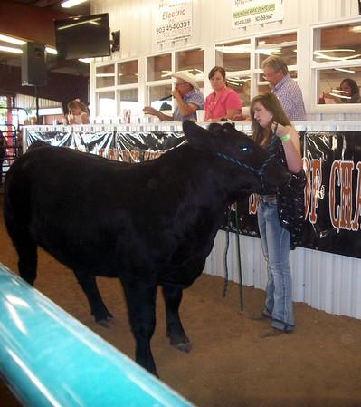 HCF Market Steer Show 2014