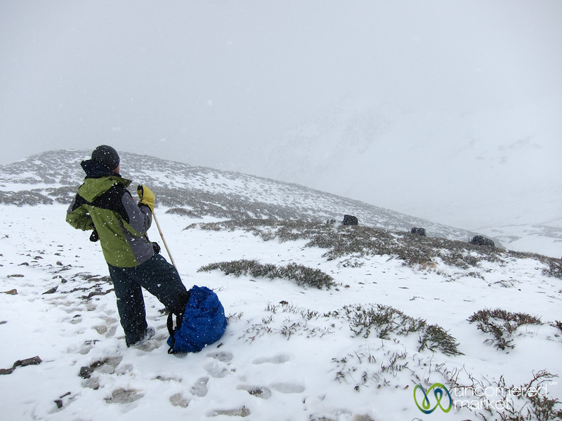 Snowstorm at Ganda La Pass - Markha Valley Trek, Ladakh, India