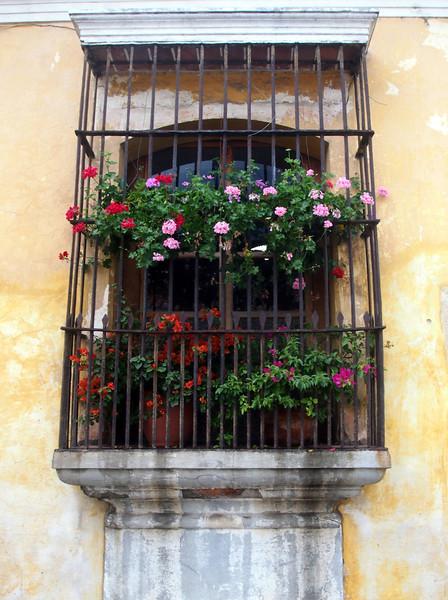 P6210342-flower-window.JPG