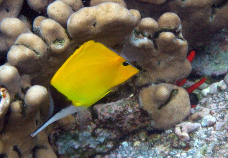 466- 20080416- Hawaii 20-Snorkelling IMG_0658.jpg