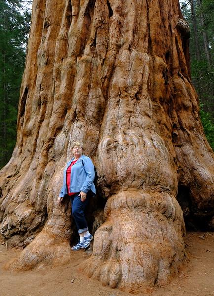 California Day 6 Sequoia 05-30-2017 85.JPG