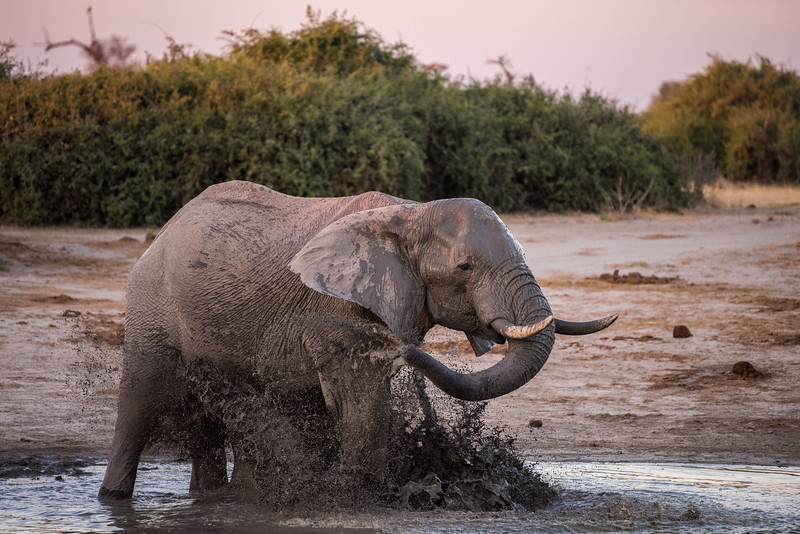 Botswana_June_2017 (4239 of 6179).jpg