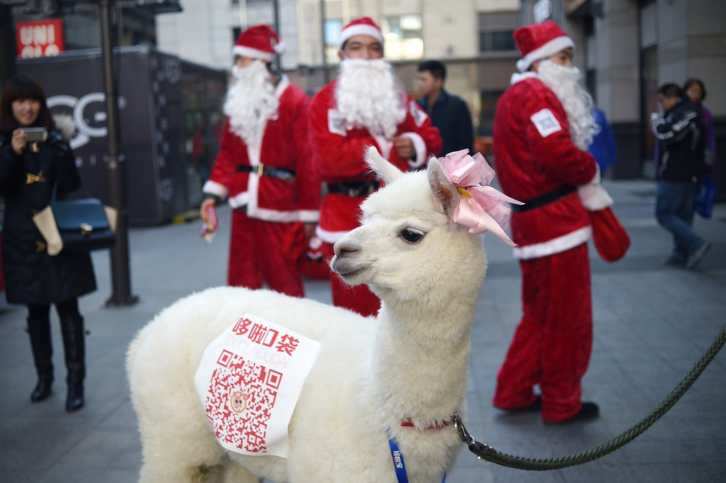 . An alpaca is used during a sales promotion in Beijing on December 25, 2014. Christmas -- once banned in China -- has exploded in the atheist nation in recent years, with marketers using everything from saxophones and smurfs to steam trains to get shoppers to open their wallets. WANG ZHAO/AFP/Getty Images