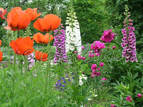 Scenic Flowers