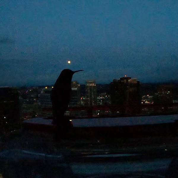 Bird Moon 1.jpg