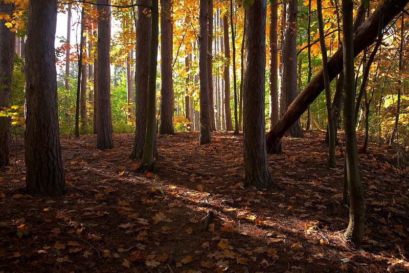 Beaver Creek Fall-Trees 24x16.jpg
