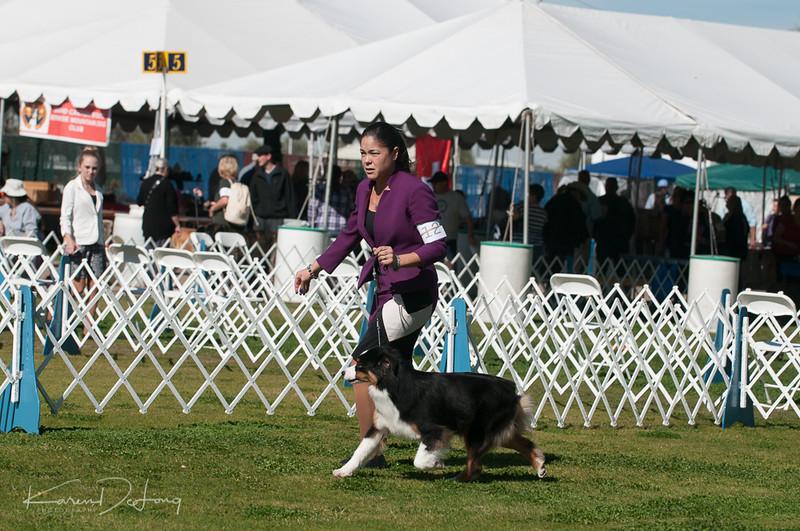 20170205_Australian Shepherds_Lost Dutchman Kennel Club-117.jpg