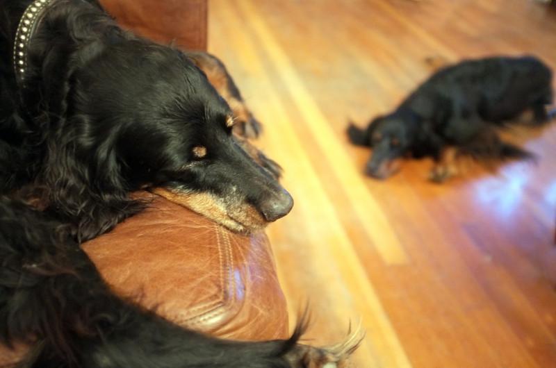 sleeping-dogs-lie.jpg