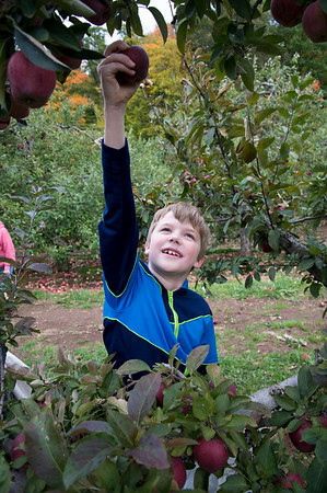 10/11/19 Wesley Bunnell | StaffrrScott Claude Pierre, age 9, picks apples with his family at Rogers Orchards in Southington on Friday afternoon.